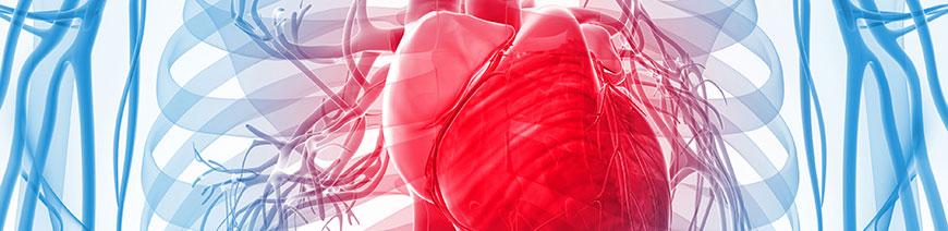 kardiologoi